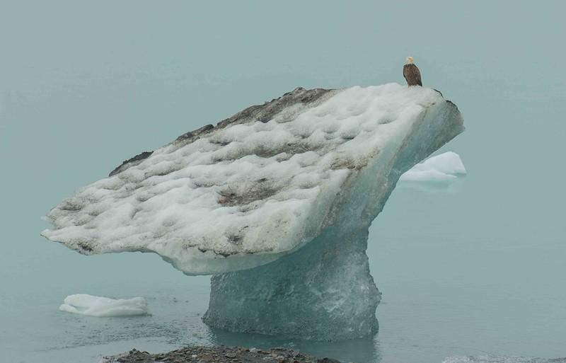 Glacier Bay 9 (1).jpg