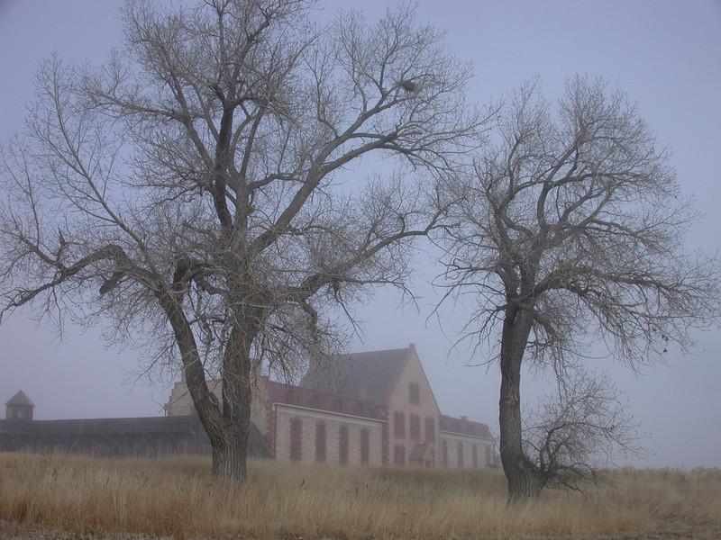 Cottonwood Sentinels, Wyoming Territorial Park, Laramie