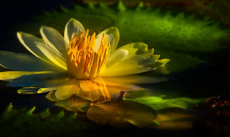 The Magic of Light-339.jpg