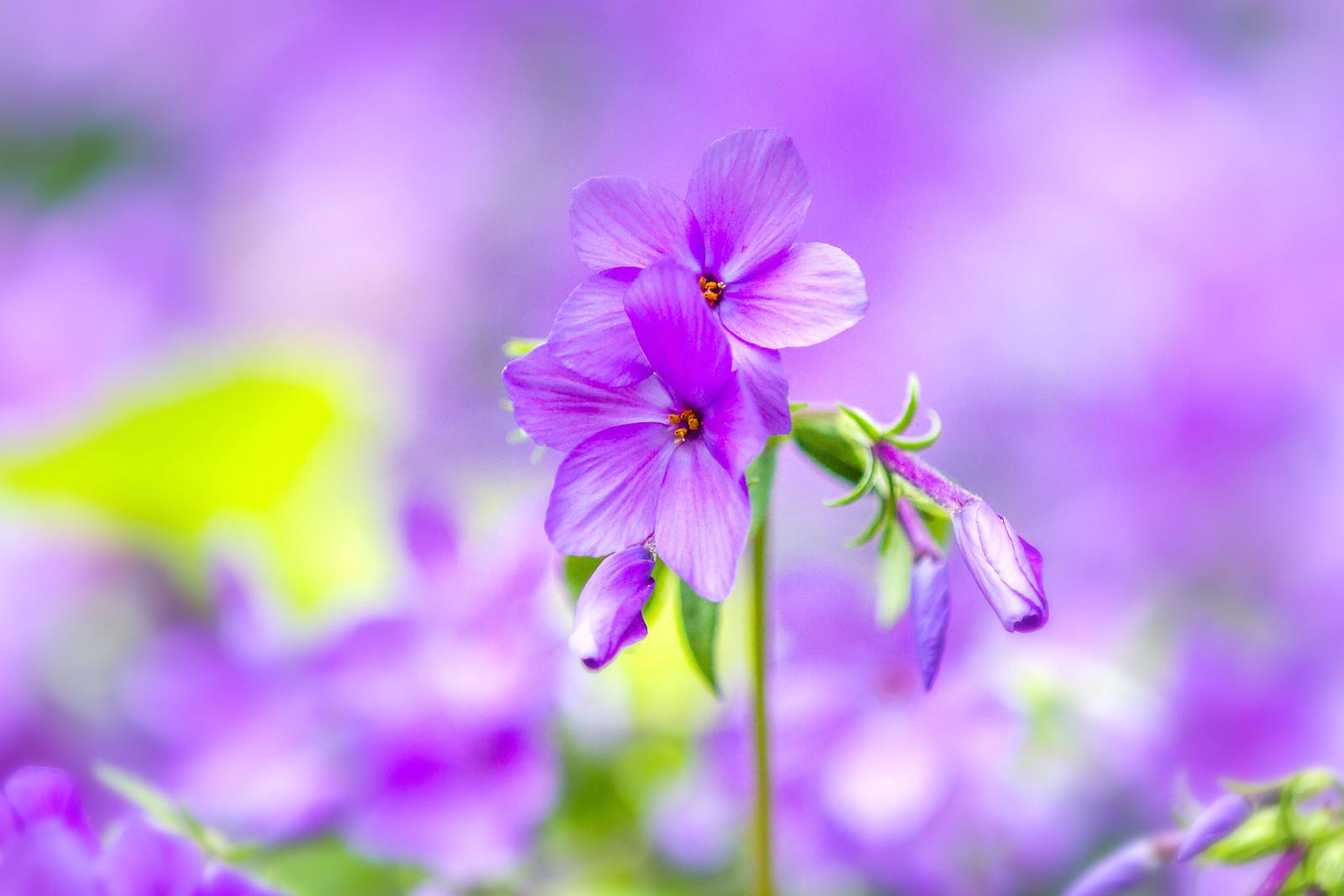 姹紫嫣红的花儿
