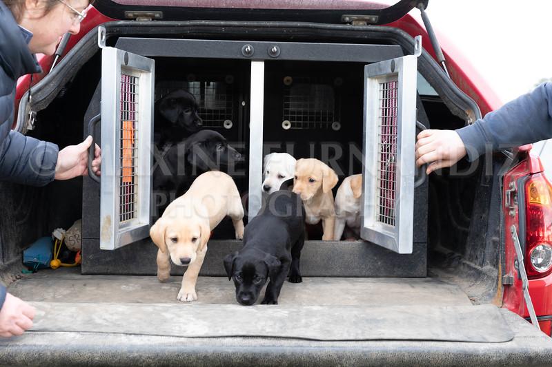 Weika Puppies 24 March 2019-8764.jpg