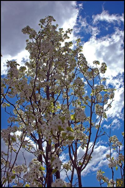 SpringDay1.jpg