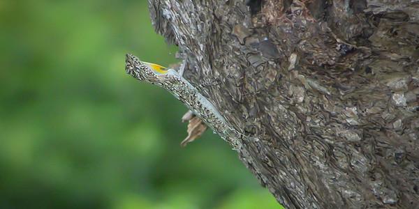 Thailand Reptiles