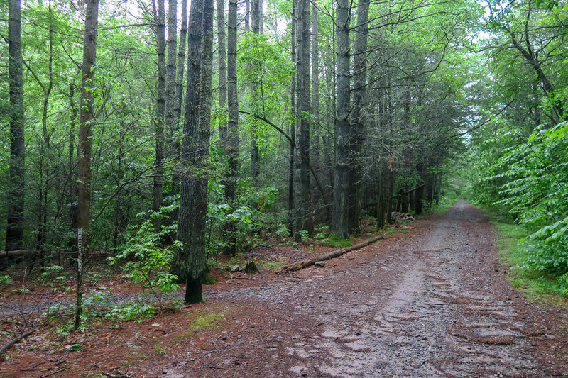 Lower Sidehill Trail/Forest Road 479G Upper Junction -- 2,300'