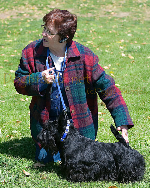 Scottish Terrier Club 2011 Spring Puppy Match - Handling Class