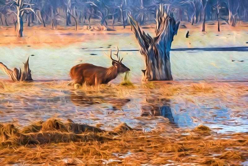 Deer in the Swamp