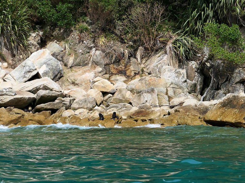 Baby seals in Abel Tasman National Park