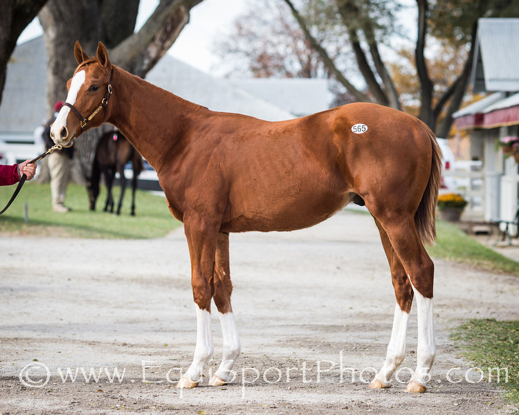 Hip #565, Sidney's Candy - Authenic Deed '13
