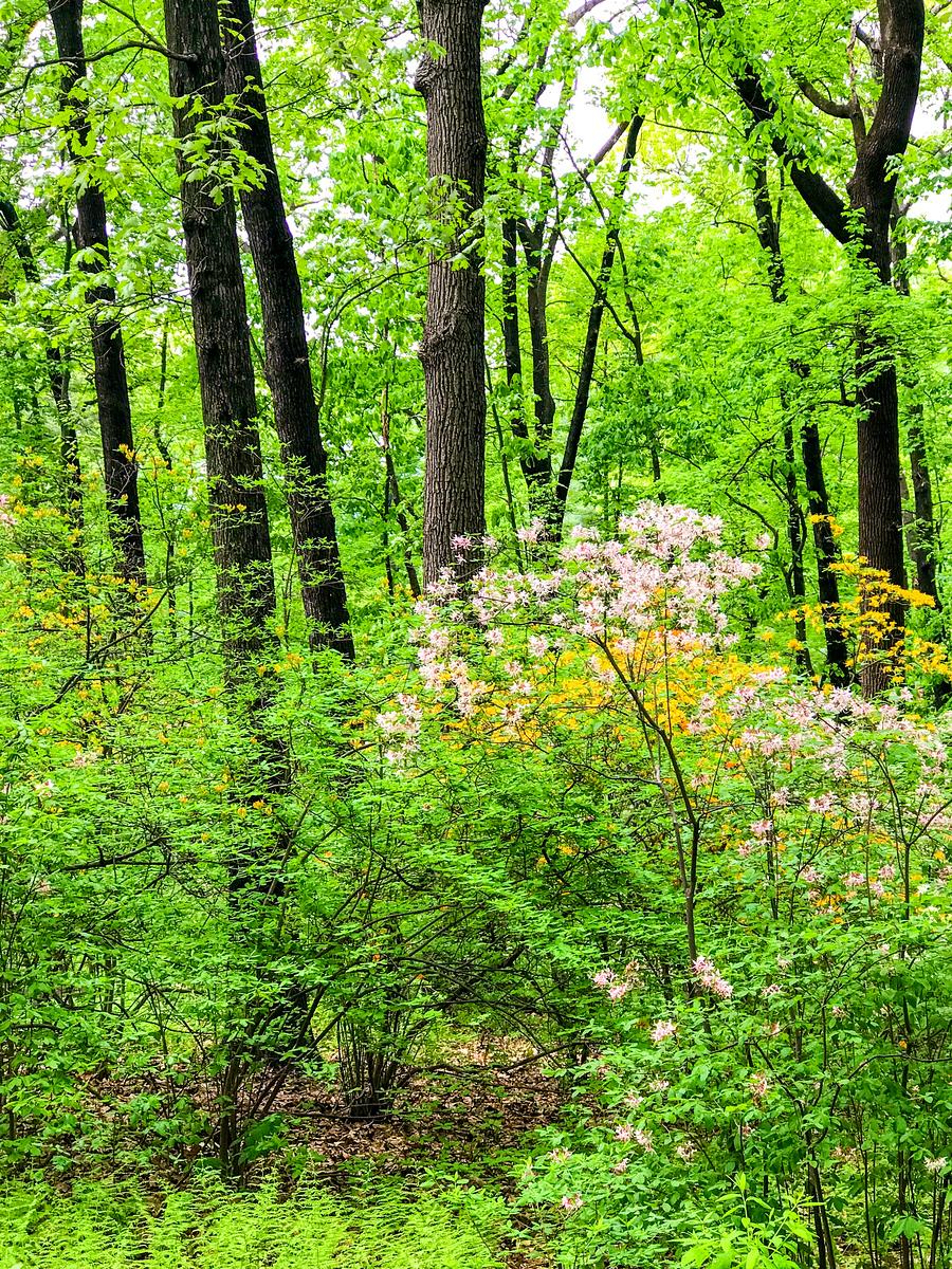 绿树成荫,鲜花盛开