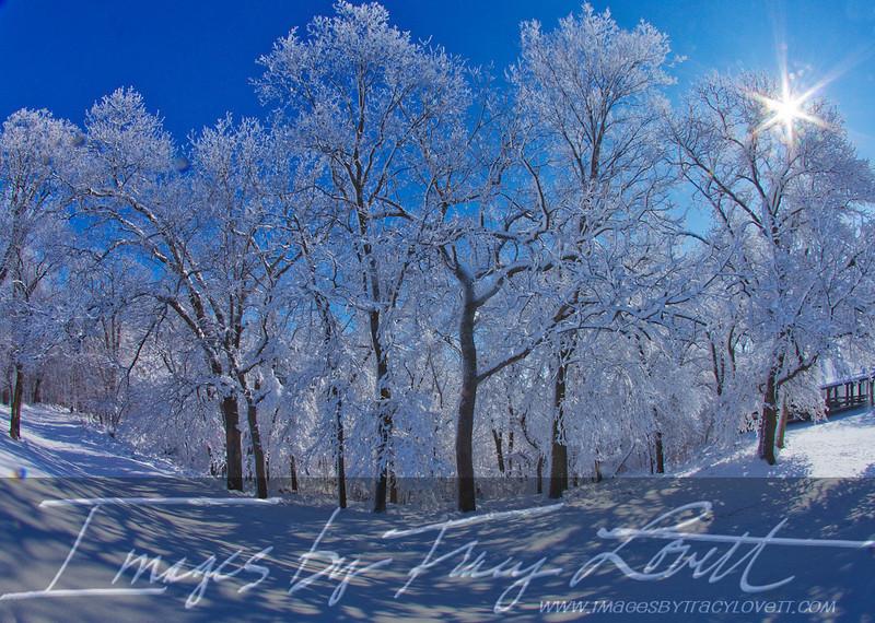 snow_3357 copy.jpg