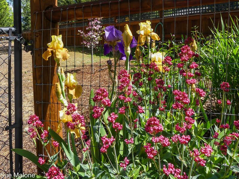 05-04-2021 Early May Flowers-31.jpg