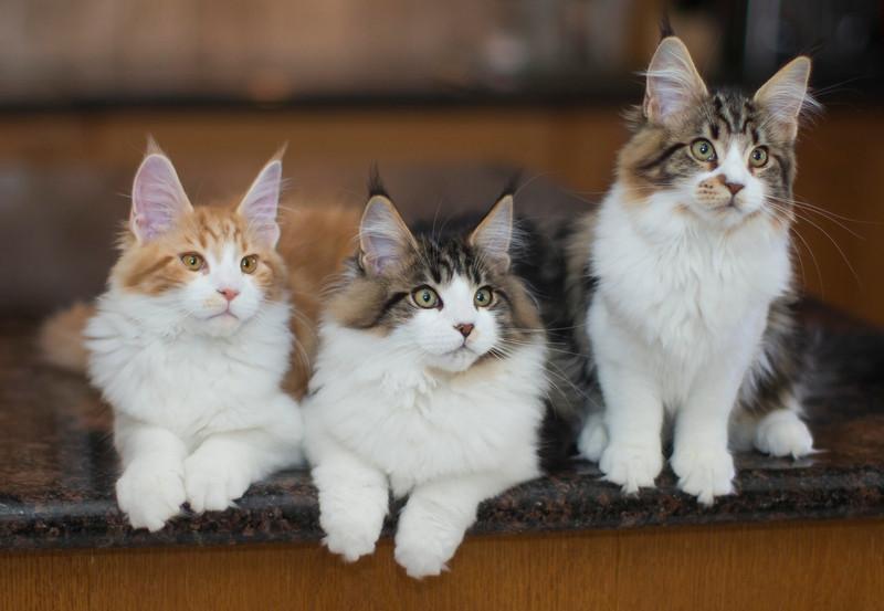 Kittens291.jpg