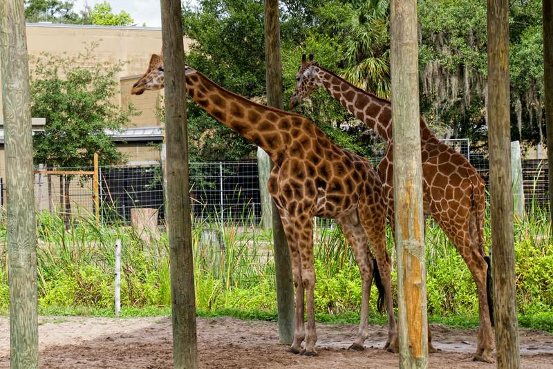 R_Tampa_Zoo-381-Edit.jpg