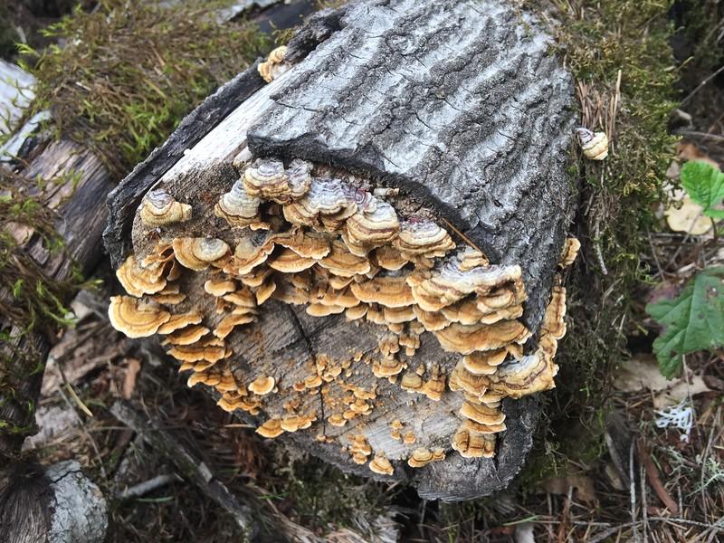 Mushrooms on bark