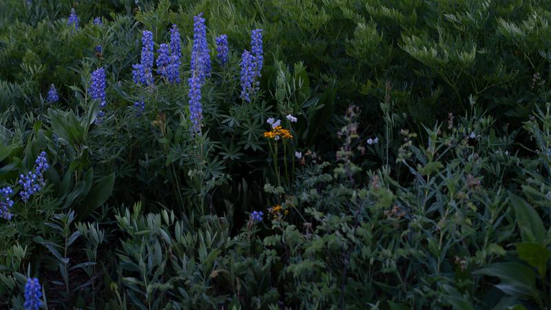 _meadow916-Enhanced.jpg