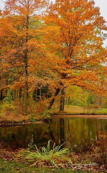 Autumn in the Arboretum-October 2019