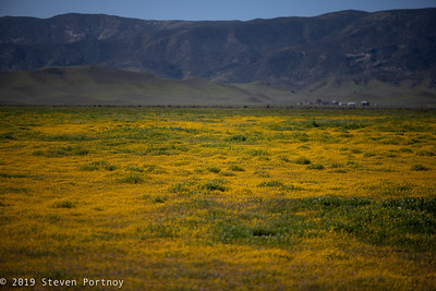 Carrizo Plain, March 14-16, 2019