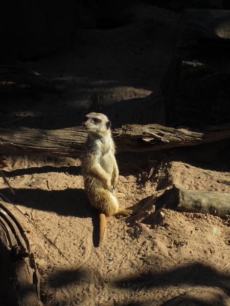 Sydney - Sydeny Zoo-111.JPG