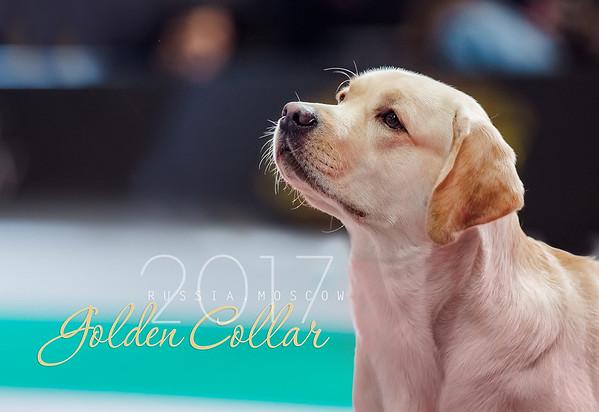 Golden Collar 2017
