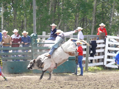 Bull Riding Section 2
