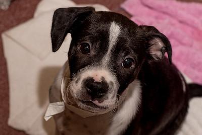 Animals 8-30-2016 puppies