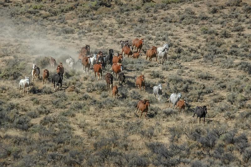 Wild Horses Running #9