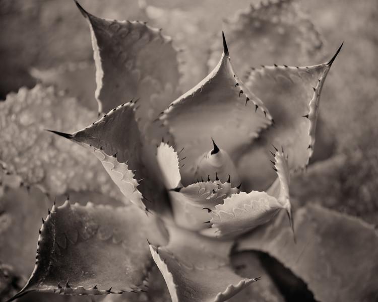 Succulent #1
