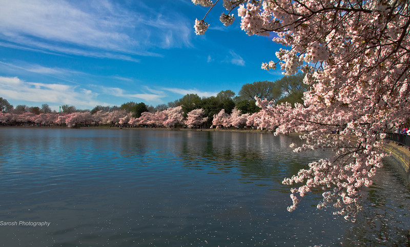 CherryBlossomSP-44.jpg