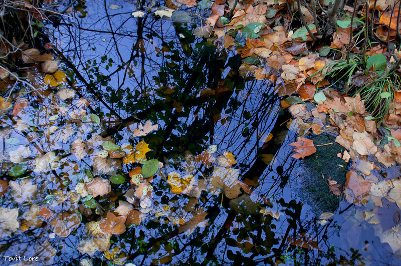 Fall Refetions