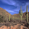 Southern Arizona : 3 galleries with 50 photos