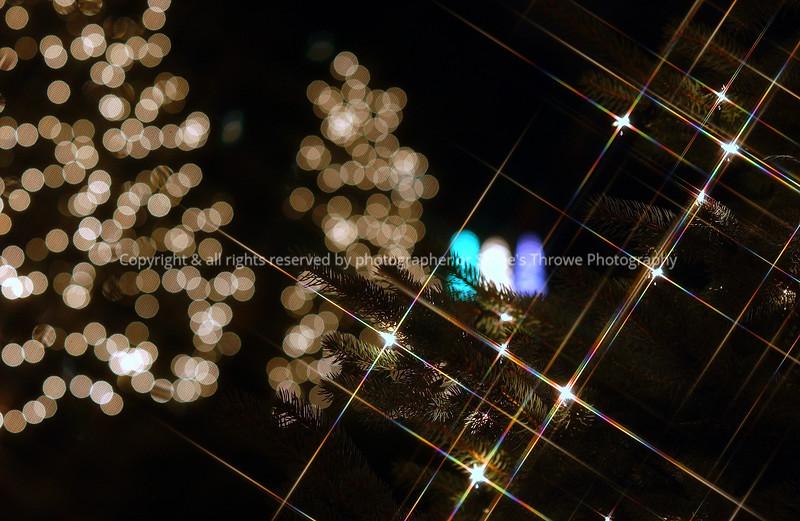 015-christmas_lights-wdsm-26nov05-8853.jpg