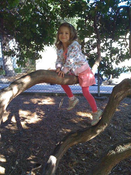 Sam's Tree at Poinsett