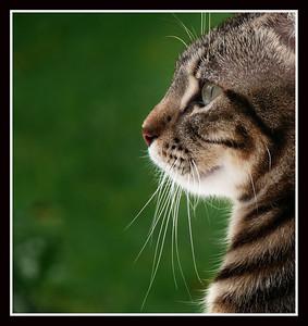 Our cat Spiga