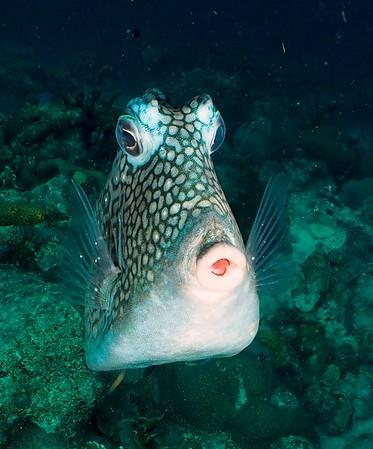 Buddy Dive Bonaire 2019 Sprng Break