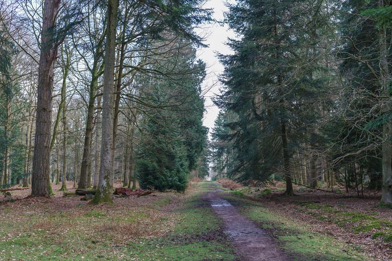 New Forest, Rhinefield Ornamental Drive