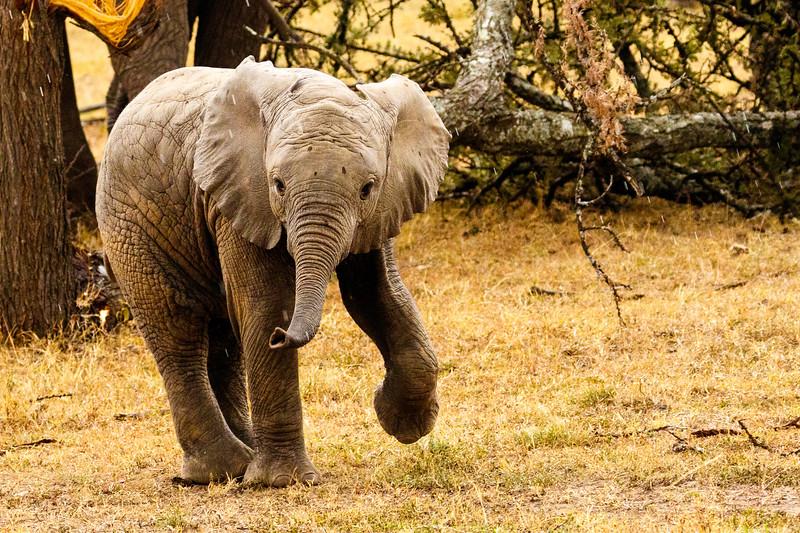 Kenya 2015-09298.jpg