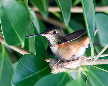 Allen and Her Nest