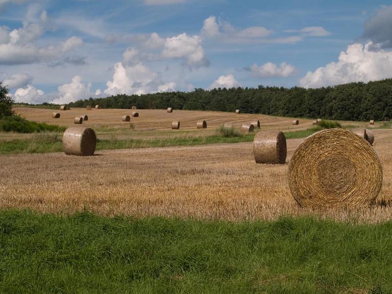 cifcap  German Landscape