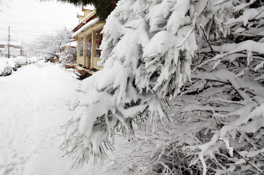 . Snow covered trees in front of a residence on Green Street in Lansdale.      Monday, February 3, 2014.  Photo by Geoff Patton