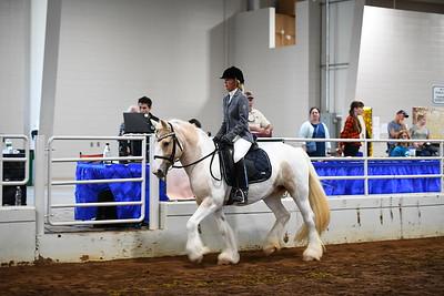 40 ld english under saddle