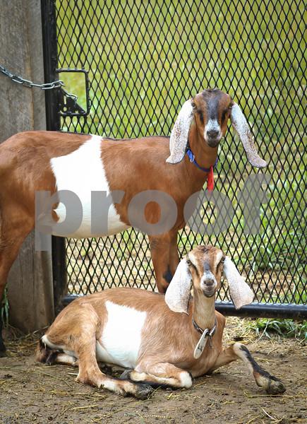 AroundMainLine.com Yellow Springs Farm