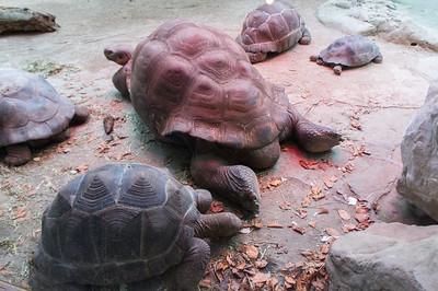 2013-02-11 - Zurich Zoo
