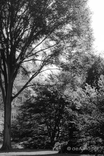 Cylburn Arboretum-aeamador-0006.jpg