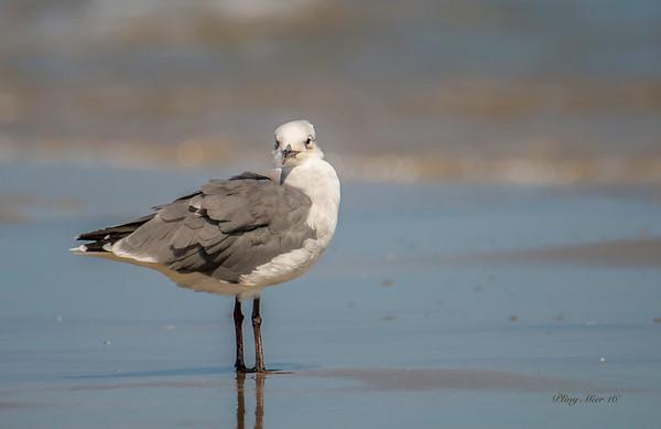 Gull?_DWL6174.jpg