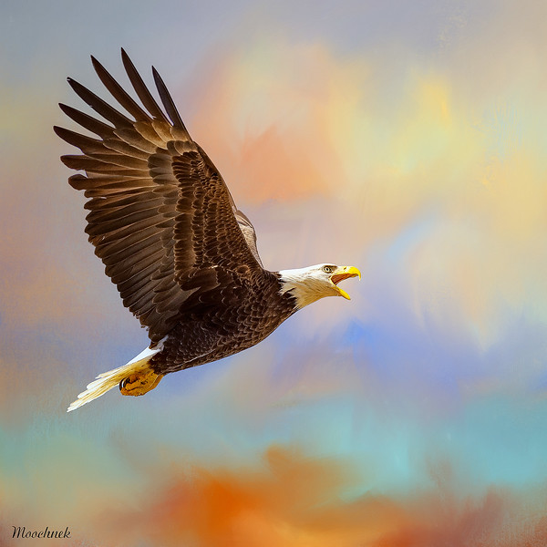 Eagle_DSC9298-copy.jpg