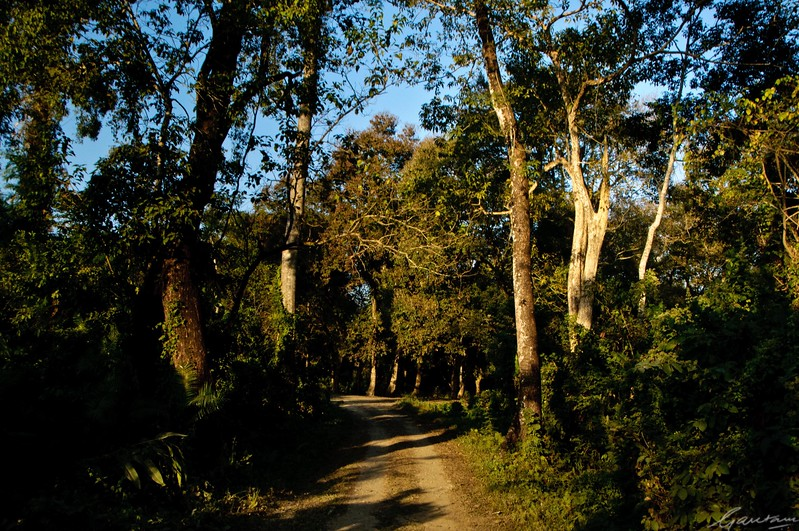 06: Kaziranga Forests 22 December 2011