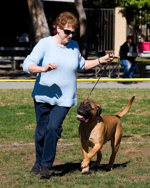Del Sur Kennel Club Puppy Match - November 2012
