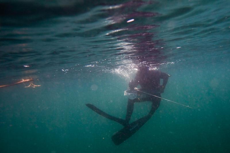 20090420_Underwater_Mexico_0283.jpg