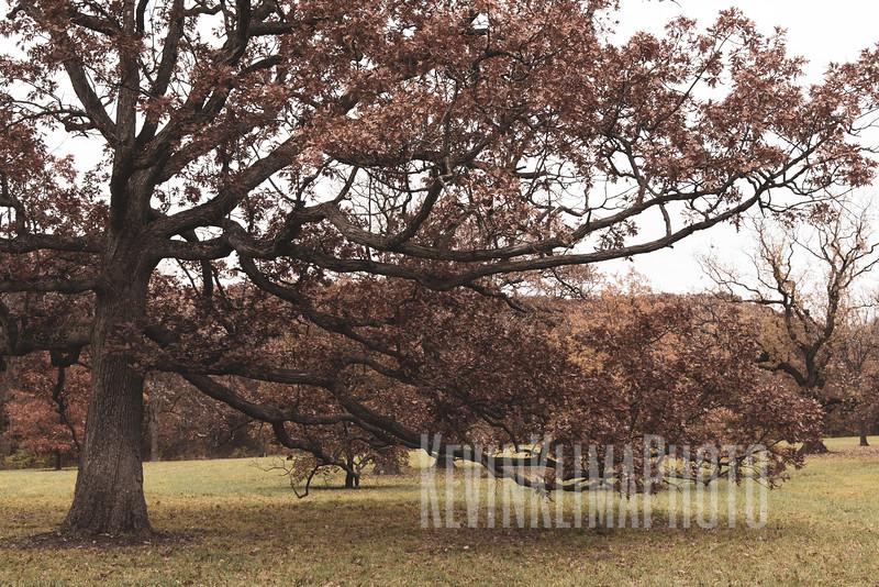 arboretum-oct2018-02.jpg