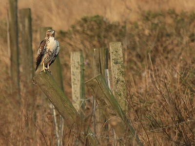 Pt Reyes Tomales Point hike Sept 2nd